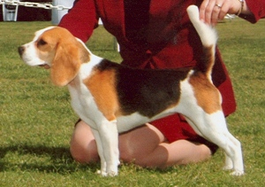 sophie-bov-hound-classic