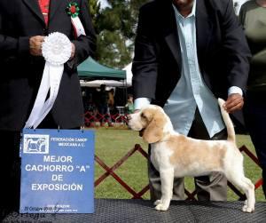 MG Carlos Gardel