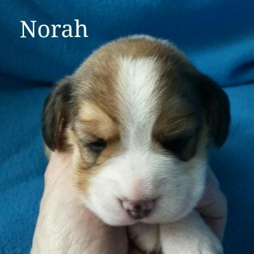 Norah 2 weeks