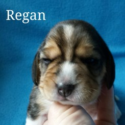 Regan 2 weeks