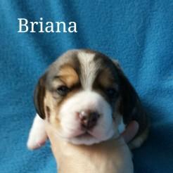 Briana 2 weeks