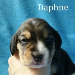 Daphne 2 weeks