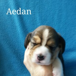 Aedan 2 weeks