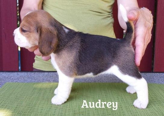 audrey4w2