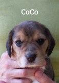 cocoh4w