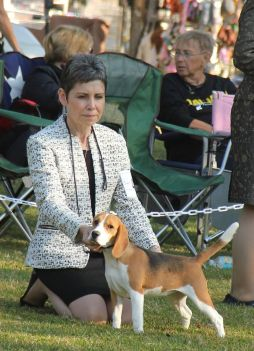 "Talbot Hill Dukeang Wanderlust, ""Audrey"" - 2016 NBC Specialty, class placement in the Bred By Exhibitor class. 6 months old at her first show."