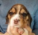 Denny at 3 weeks