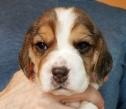 Seneca at 3 weeks