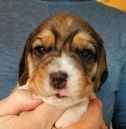 Dexter at 3 weeks