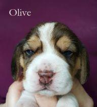Olive 2w
