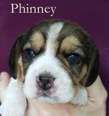 Phinney 2w