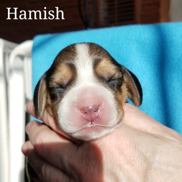 Hamish - Talbot Hill Dukeang Dinna Fash
