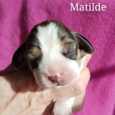 Matilde - Talbot Hill Dukeang Three Quarter Thyme
