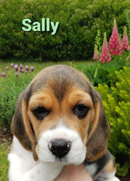 """Sally, soon to be """"Luci"""" - 6 weeks"""