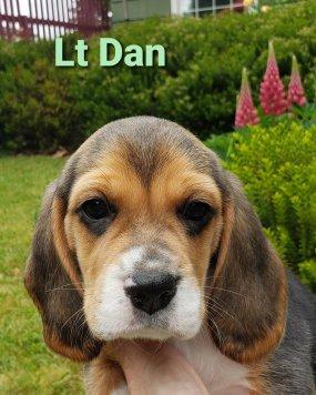 Lt Dan - 6 weeks