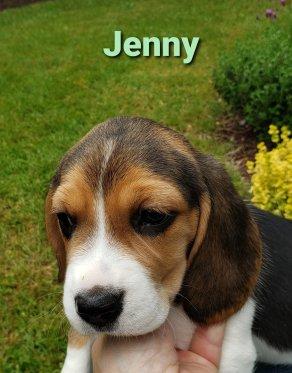 Jenny - 6 weeks